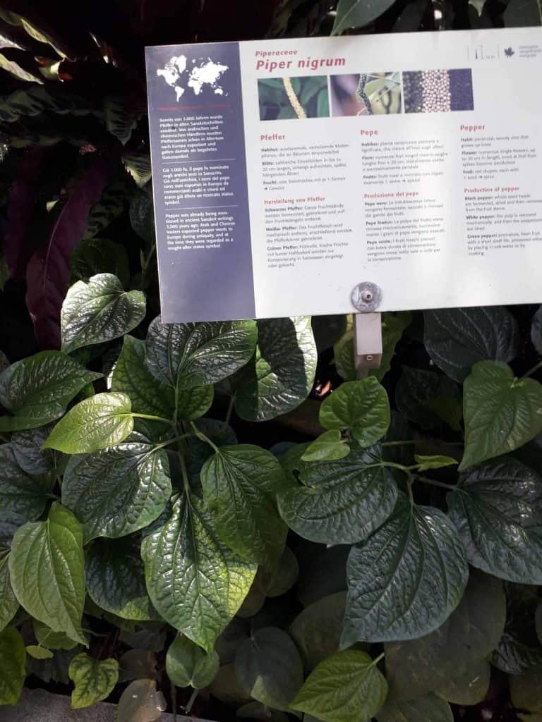Fleischfressende Pflanzen und Kakteen - Trauttmansdorff 9