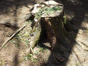 Waldtag der ersten Klassen 7