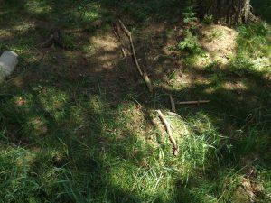 Waldtag der ersten Klassen 2