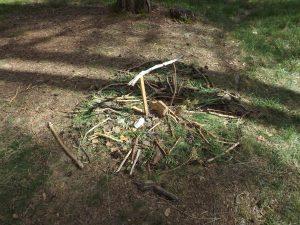 Waldtag der ersten Klassen 1