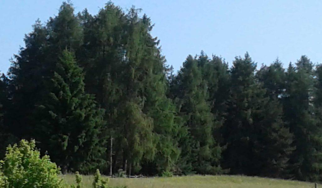 Titelbild Waldtag
